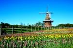 DeZuaan Windmill, Holland, MI