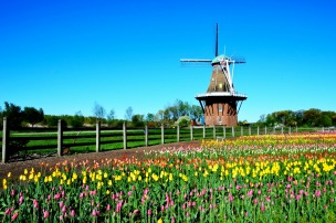 DeZuaan Windmill, Holland, MI