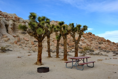 How's this for a cool campsite?  Hmm, those Joshua trees should handle two hammocks.