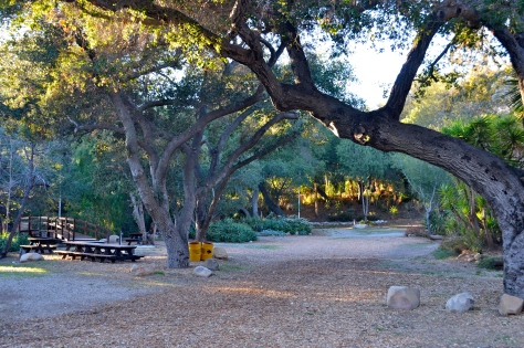 Kenney Grove Park is sheltered by massive old oak trees.