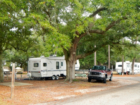 Our campsite is under a stately old live oak tree.