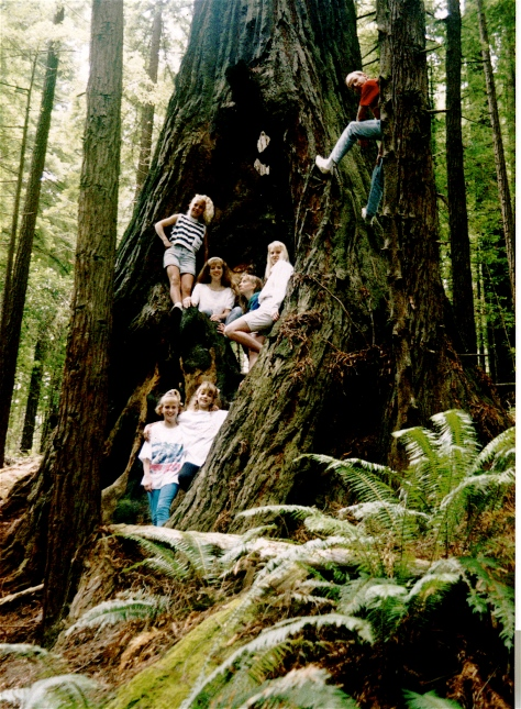 Our kids - with some of their cousins - inside a giant redwood tree in northern California.