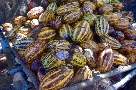 As this fruit market they make their own chocolate syrup directly from the fresh cocoa beans grown out in back.