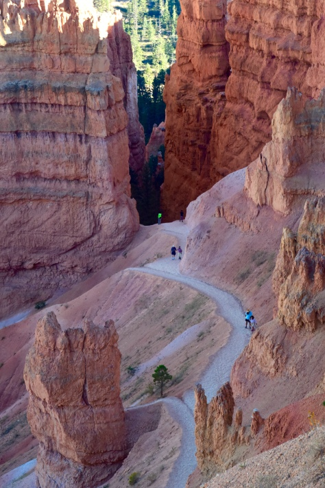 Navajo hiking trail descends from the canyon rim just below Sunset Point.